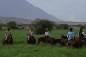 Natron Flamingo Ride horses