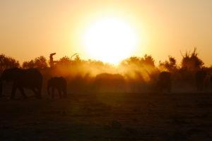Sambia Safari 1