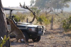 Sambia Safari 10