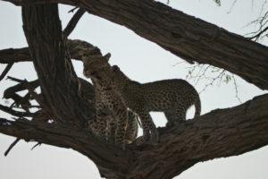 Sambia Safari 14
