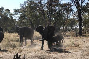 Sambia Safari 15