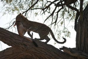 Sambia Safari 16