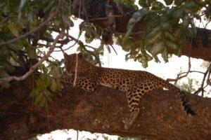 Sambia Safari 18
