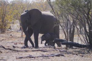Sambia Safari 19