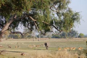 Sambia Safari 2