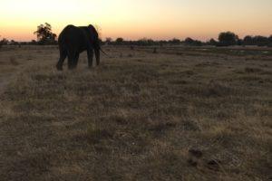 Sambia Safari 22