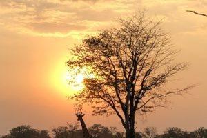 Sambia Safari 26