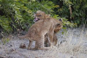 Sambia Safari 27