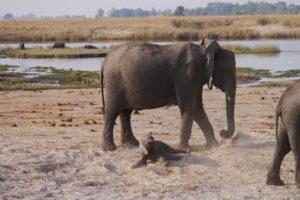 Sambia Safari 30