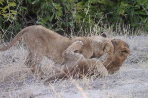 Sambia Safari 4