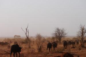 Sambia Safari 5