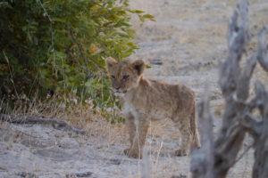 Sambia Safari 7