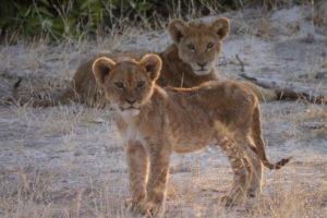 Sambia Safari 9