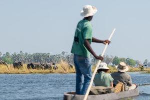 mokoro elephants okavango safari