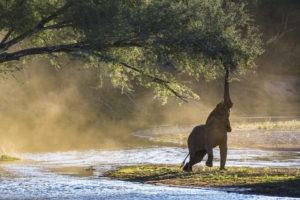 yannick bindert photographer private guide safari elephant