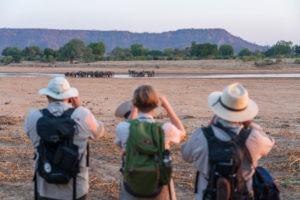 zimbabwe walking safari guests elephants gonarezhou