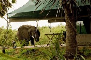 2 Animals in camp 2