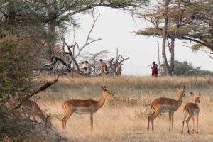 6 Walking Safari 3