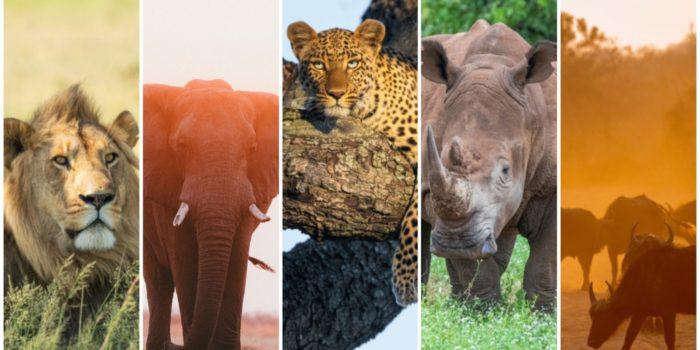 Big5 Safari Hotspots Afrika safariFRANK