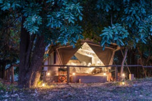 flatdogs camp south luangwa zambia standard tent night