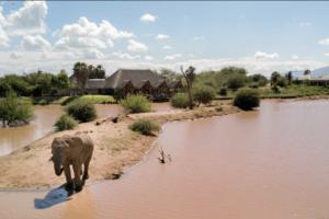 Erindi Old Traders Waterhole and elephant 1