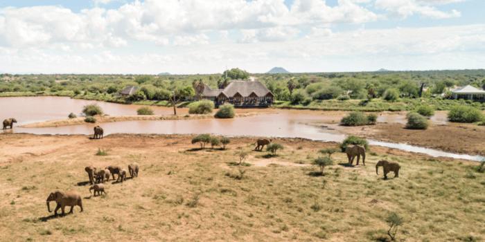 Erindi Old Traders Waterhole elephants