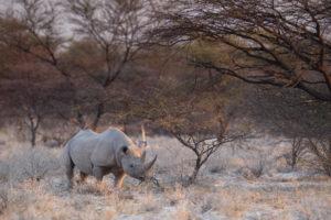 Onguma Etoscha Aoba black rhino