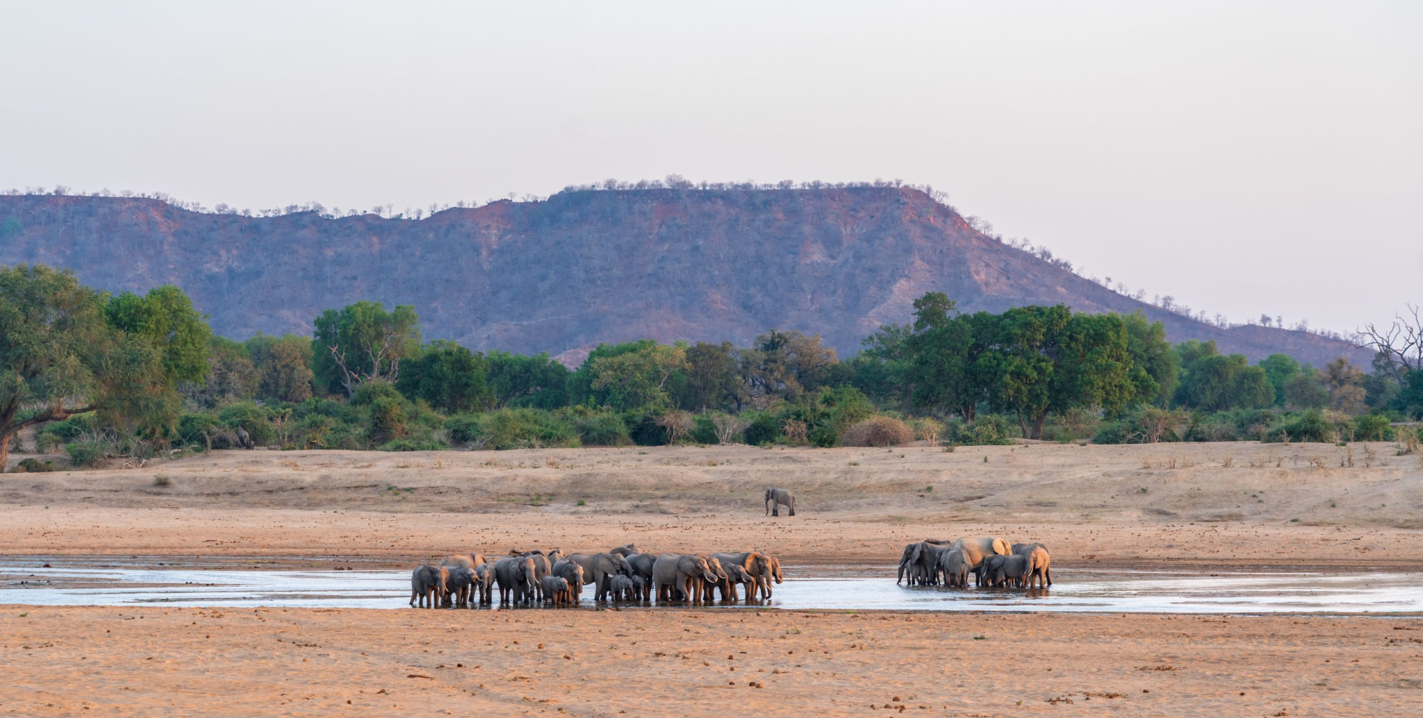 elephants frank steenhuisen private guide zimbabwe gonarezhou